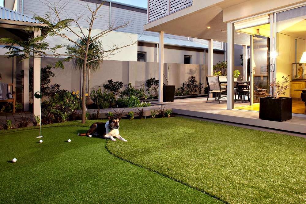 golf artificial turf putting green with Ruffles the dog