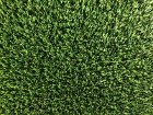 Artificial Grass Perth - Buffalo - Thumb