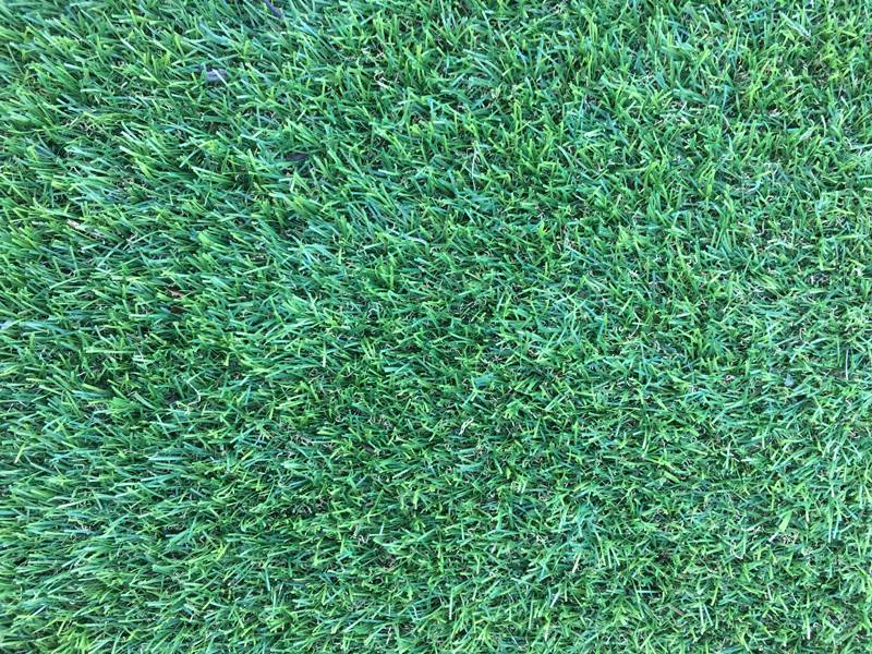 Artificial Grass Perth - Central Park - Zoom