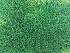 Artificial Grass Perth - Summer - Thumb