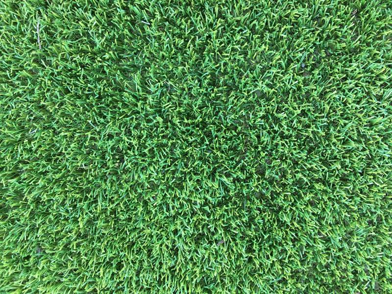 Artificial Grass - Vegas - Zoom