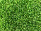 Artificial Grass - Plush - Thumb